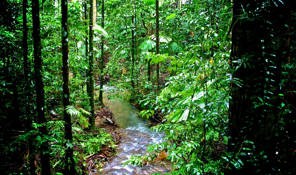 the decreasing numbers of rain forest in the world In the lockyer valley catchment of queensland, there was a 37% increase in the number of forest fragments between 1973 and 1997 and a 54% decrease in mean patch size (from 337 to 154 ha) (apan et al 2000.